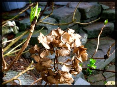 flowerdeath